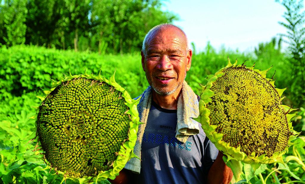 河北省邯郸市鸡泽县不断调整产业